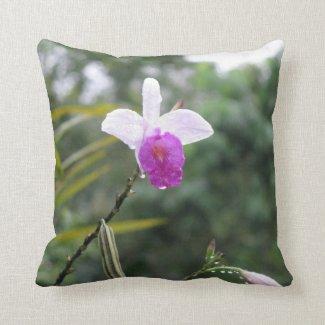 Costa Rica. Monteverde. Pillows