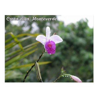 Costa Rica. Monteverde Post Card