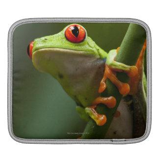 Costa Rica, Monteverde, Red-Eyed Tree Frog iPad Sleeve