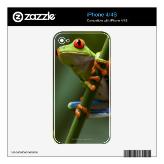 Costa Rica, Monteverde, Red-Eyed Tree Frog iPhone 4S Skin