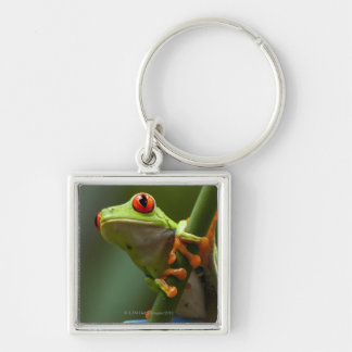 Costa Rica, Monteverde, Red-Eyed Tree Frog Keychain