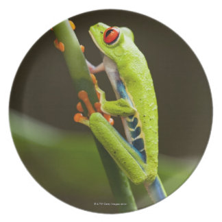 Costa Rica, Monteverde, Red-Eyed Tree Frog Party Plate