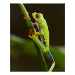 Costa Rica, Monteverde, Red-Eyed Tree Frog Posters