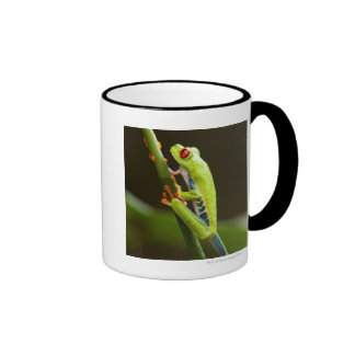 Costa Rica, Monteverde, Red-Eyed Tree Frog Ringer Mug