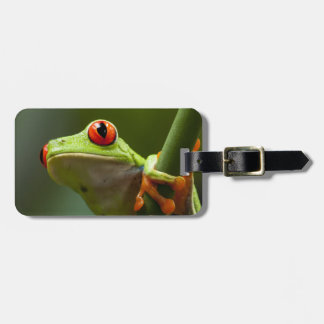 Costa Rica, Monteverde, Red-Eyed Tree Frog Tag For Luggage
