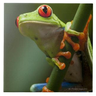 Costa Rica, Monteverde, Red-Eyed Tree Frog Tile