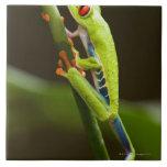Costa Rica, Monteverde, Red-Eyed Tree Frog Ceramic Tile