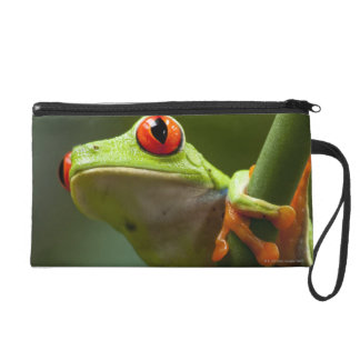 Costa Rica, Monteverde, Red-Eyed Tree Frog Wristlet