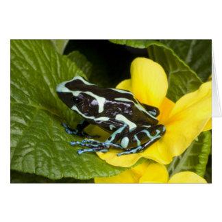 Costa Rica, Osa Peninsula. Close-up of poison Card