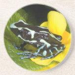 Costa Rica, Osa Peninsula. Close-up of poison Beverage Coasters