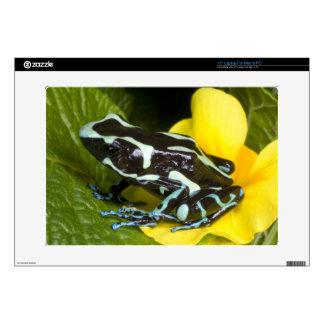 Costa Rica, Osa Peninsula. Close-up of poison Laptop Decal
