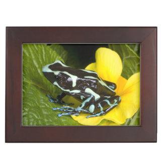 Costa Rica, Osa Peninsula. Close-up of poison Memory Box