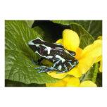 Costa Rica, Osa Peninsula. Close-up of poison Photo Print