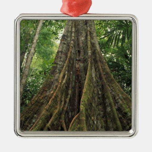 Costa Rica, parque nacional de Corcovado, Adorno Cuadrado Plateado