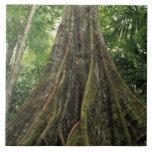 Costa Rica, parque nacional de Corcovado, reforzad Azulejo Cuadrado Grande