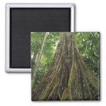 Costa Rica, parque nacional de Corcovado, reforzad Imán Cuadrado
