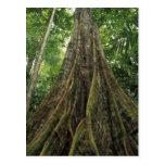 Costa Rica, parque nacional de Corcovado, Tarjeta Postal