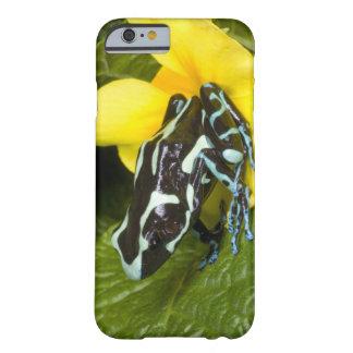 Costa Rica, península de Osa. Primer del veneno Funda Para iPhone 6 Barely There