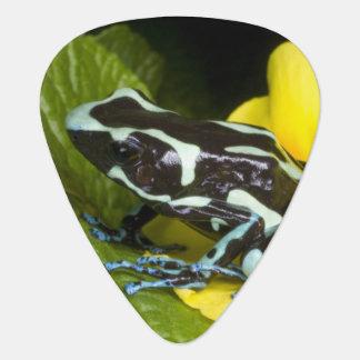 Costa Rica, península de Osa. Primer del veneno Plumilla De Guitarra