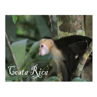 Costa Rica - postal de Cappuchin