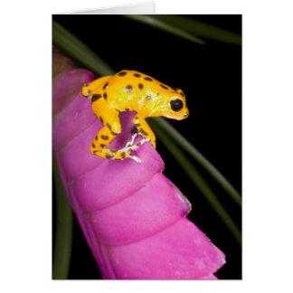 Costa Rica. Primer de la rana del dardo del veneno Tarjeta De Felicitación