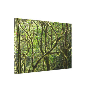 Costa Rica Rain Forest Canopy Stretched Canvas Print