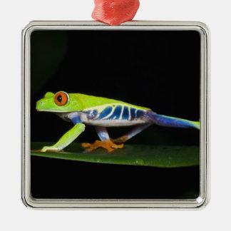 Costa Rica, rana arbórea Rojo-observada Ornamentos Para Reyes Magos
