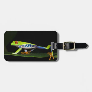 Costa Rica, Red-eyed Tree Frog (Agalychnis Travel Bag Tag