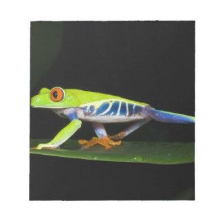 Costa Rica, Red-eyed Tree Frog (Agalychnis Notepad