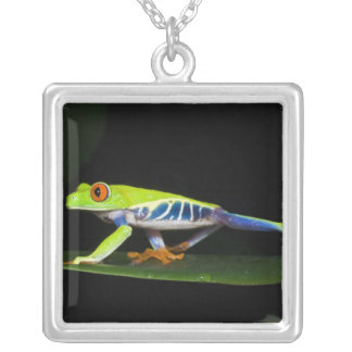 Costa Rica, Red-eyed Tree Frog (Agalychnis Silver Plated Necklace