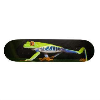 Costa Rica, Red-eyed Tree Frog (Agalychnis Skateboard