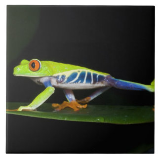 Costa Rica, Red-eyed Tree Frog (Agalychnis Tile