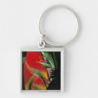 Costa Rica, Red Eyed Tree Frog. Keychain