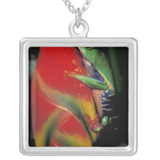 Costa Rica, Red Eyed Tree Frog. Silver Plated Necklace