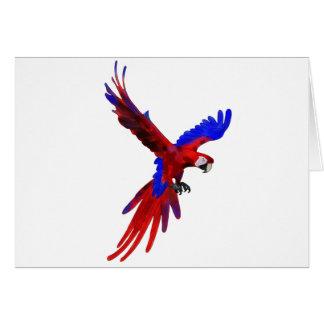 Costa Rica Red Macaw Card