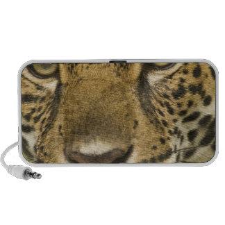 Costa Rica. Retrato del onca del Panthera de Jagua iPod Altavoz