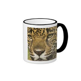 Costa Rica. Retrato del onca del Panthera de Taza De Dos Colores