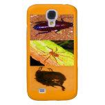 Costa Rica salvaje - arañas, cucarachas e insectos