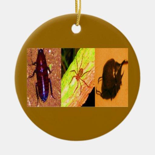 Costa Rica salvaje - arañas, cucarachas e insectos Ornato