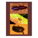 Costa Rica salvaje - arañas, cucarachas e insectos Postal