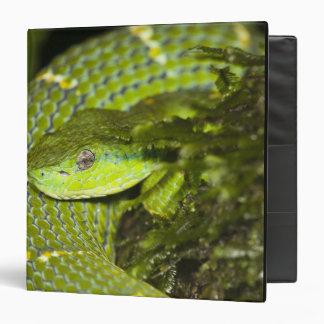 Costa Rica Striped Palm Viper Bothriechis Vinyl Binder