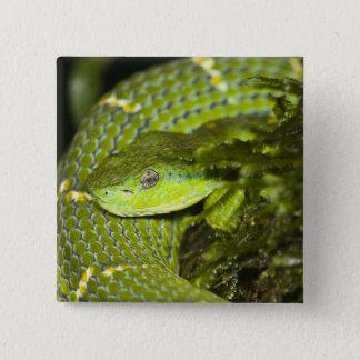 Costa Rica. Striped Palm Viper Bothriechis Pinback Button
