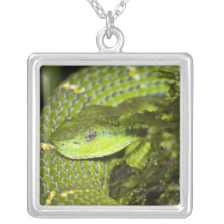 Costa Rica. Striped Palm Viper Bothriechis Silver Plated Necklace