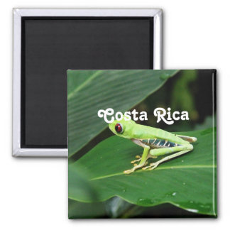 Costa Rica Tree Frog 2 Inch Square Magnet