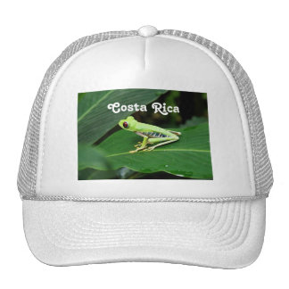 Costa Rica Tree Frog Hat