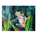 Costa Rica Tree Frog Post Card
