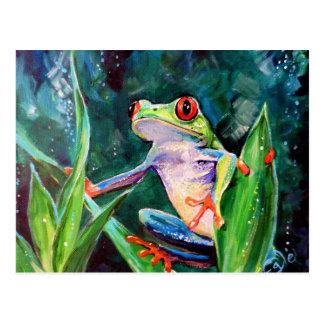 Costa Rica Tree Frog Postcard