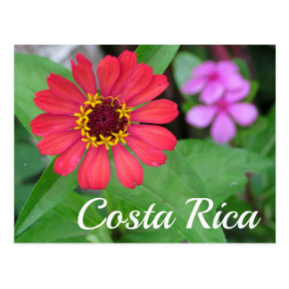 Costa Rica Wildflowers Postcard
