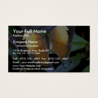 Costa Rican butterfly Business Card