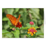 Costa Rican Butterfly Stationery Note Card